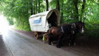 Bear and Arnie Pulling their horsedrawn caravan